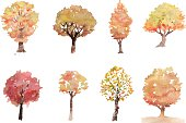 Collection of vector hand drawing watercolor autumn tree.File contain EPS8 and large JPEG.