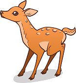 Baby Deer drawing. Vector illustration