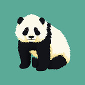 Baby giant panda sitting. Black and white chinese bear cub. Rare, vulnerable species.