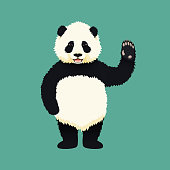 Baby giant panda standing on hind legs and waving. Black and white chinese bear cub. Rare, vulnerable species.