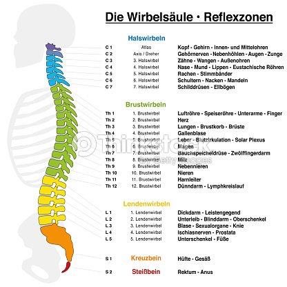 Tabla De Reflexología De Columna Vertebral Con Descripción Exacta De ...
