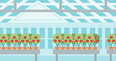 Background of tomatoes in the greenhouse vector flat design illustration. Horizontal layout.