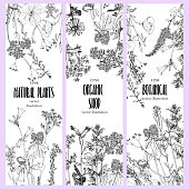 Vector background with drawing wild plants, herbs and flowers, monochrome botanical illustration in vintage style, natural floral template