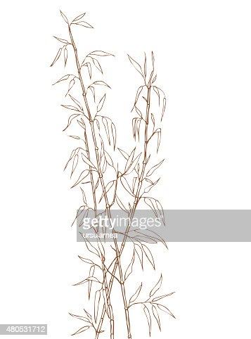 Bamboo shoots : Vector Art