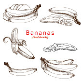Bananas set, vector hand drawing