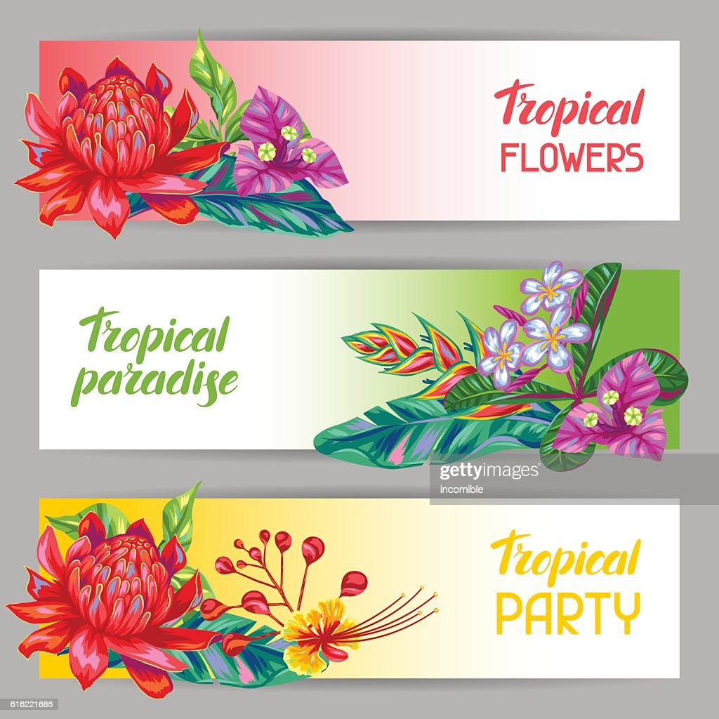 Banners with Thailand flowers. Tropical multicolor plants, leaves and buds : Vektorgrafik