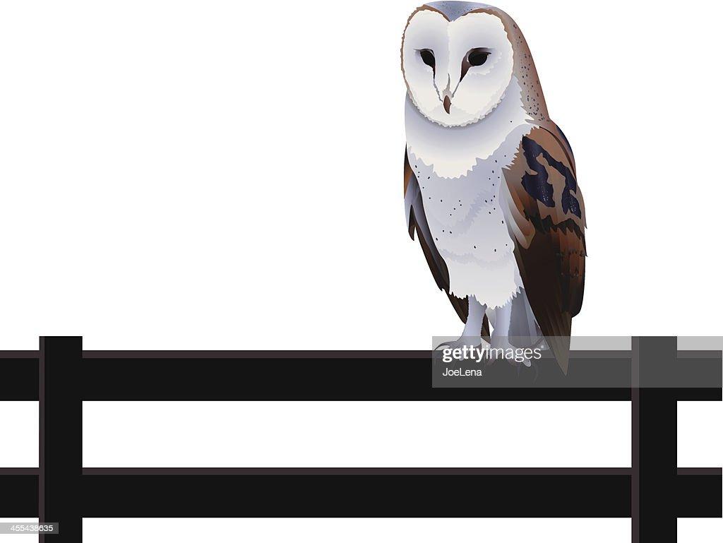 Barn Owl : Vector Art