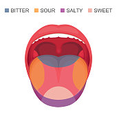 vector illustration of a basic taste areas on human tongue, sour, sweet, bitter and salty. sense zone