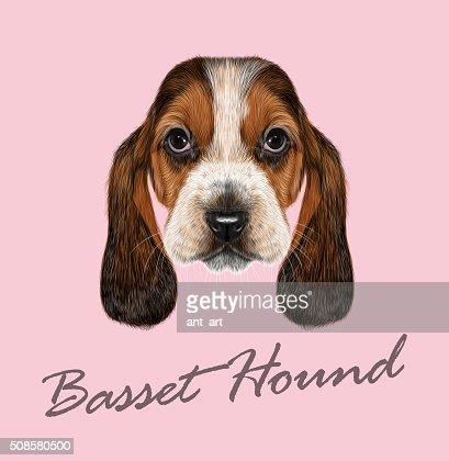 Basset Bracke Hund. : Vektorgrafik
