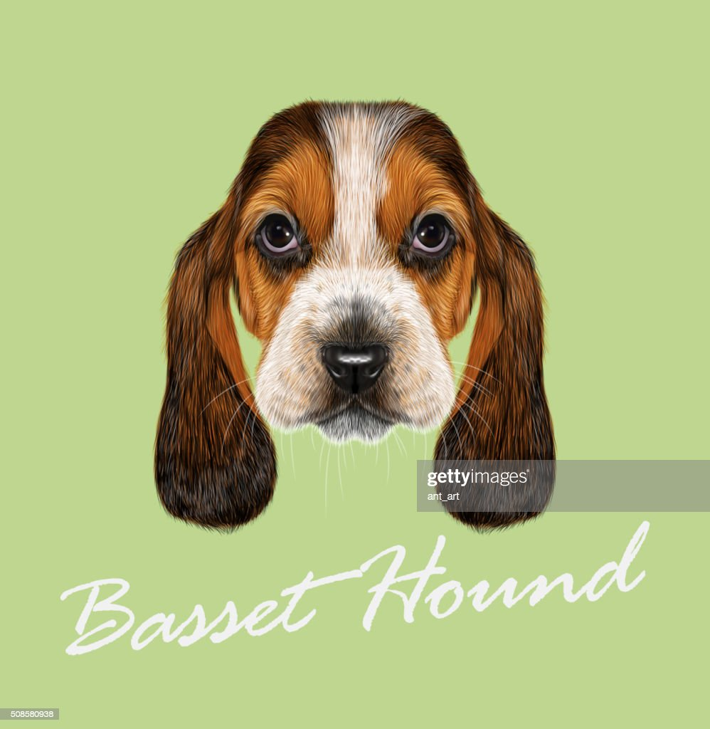 バセット犬ていただきます。 : ベクトルアート