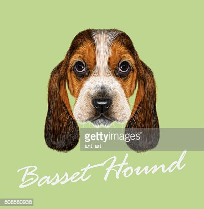 Basset Hound Dog. : Vector Art