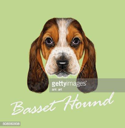 Basset Hound Dog. : Vectorkunst