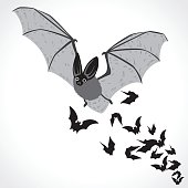 image graphic style of bat  isolated on white background , halloween concept
