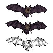 Bat flying with scary face. Vector vintage engraving and flat illustration. Isolated on white background. For invitation and poster Halloween.