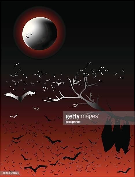 Bats' Night