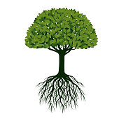 Beautiful Green Tree with Roots. Vector Illustration.