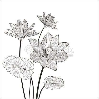 Beautiful Lotus Flower Illustration Vector Black And White Floral