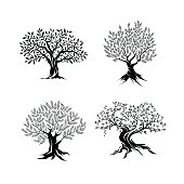 Beautiful magnificent olive tree silhouette isolated on white background. Modern virgin natural plant vector sign.