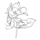 beautiful monochrome black and white flower isolated on white background. Hand-draw contour line and strokes. greeting card and invitation of wedding, birthday, mother's day and other seasonal hol