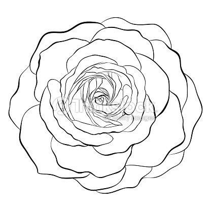 magnifique monochrome noir et blanc rose isol sur fond blanc clipart vectoriel thinkstock. Black Bedroom Furniture Sets. Home Design Ideas