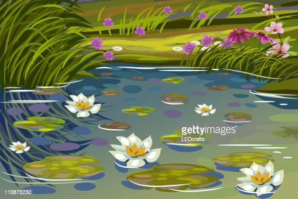 Pond Stock Illustrations And Cartoons Getty Images