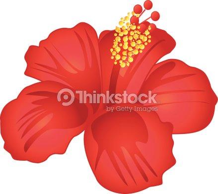 wundersch ner roter hibiskus blume vektorgrafik thinkstock. Black Bedroom Furniture Sets. Home Design Ideas