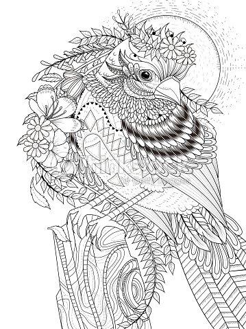 Hermoso Gorrión Adultos Página Para Colorear Arte vectorial | Thinkstock