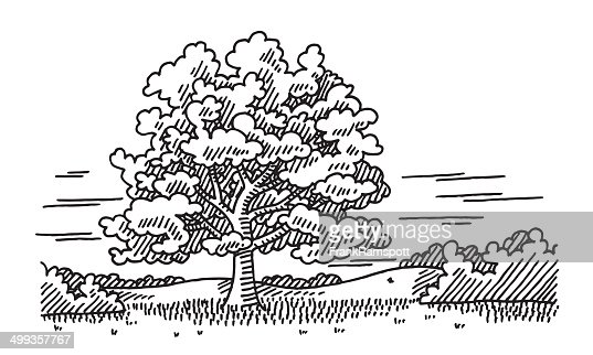 Beautiful Tree Landscape Nature Drawing Vector Art Getty
