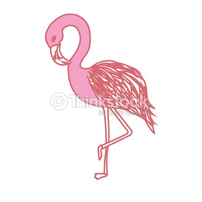 Beauty and exotic flamingo bird animal