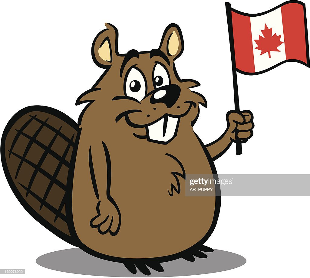 beaver holding canadian flag vector art getty images
