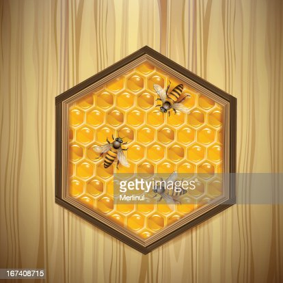 Bees and honeycombs : Vector Art