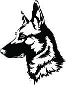 belgian malinois dog portrait