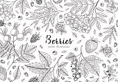 Berries collection top view illustration. Healthy food. Engraving sketch vintage style. Vegetarian food for design menu, recipes, decoration kitchen items. Great for label, poster, packaging design