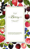 Vector mix berry banner. Design for natural cosmetics, beauty store, dessert menu, health care products. With place for text