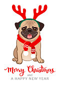 Christmas pug dog cartoon illustration. Cute friendly fat chubby fawn sitting pug puppy, smiling with tongue out, wearing red scarf and antlers. Pets, dog lovers, animal themed Christmas greeting card
