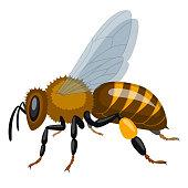 Illustrationen föreställer ett bi