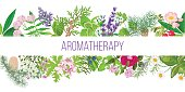 Big banner set of popular essential oil plants. Ornament with text aromatherapy. Peppermint, lavender, sage, melissa, Rose, Geranium, Chamomile, oregano etc. For cosmetics, spa health care perfumery