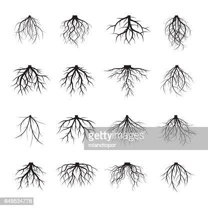 Gran colección de raíces negras. : Arte vectorial