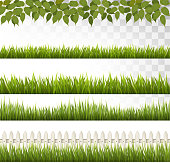 Big collection of green grass and french. Vector.