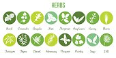 Big icon set of popular culinary herbs white silhouettes in color circles. Color background. Basil, coriander, mint, rosemary, sage, thyme, parsley etc. For cosmetics, store, health care, tag label