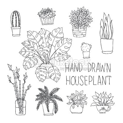 big set of hand drawn houseplants monstera, bamboo, cactus, fern and other doodle houseplants in flowerpots. : stock vector