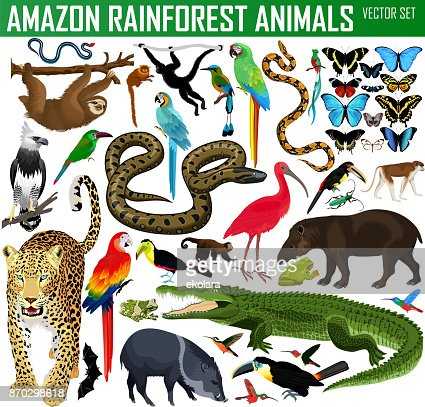 big set of vector amazon rainforest jungle animals : Vector Art