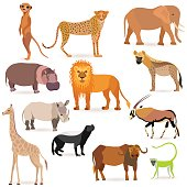 Set with such African Animals as meerkat, cheetah, elephant, lion, hyena, hippopotamus, rhinoceros, giraffe, honey badger, oryx, afrycan buffalo and green monkey Isolated on White Background