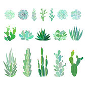 succulents and cactuses isolated on white, vector floral illustration