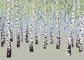 Vector illustration birch grove in spring time