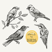 Beautiful hand drawn vector  illustration set of birds. Sketch style drawing. Use for t-shirts, print, poster, postcard, wedding invitations.