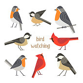 Birdwatching icon set. Red Northern cardinal, robin chickadee bird pose. Comic flat cartoon. City park backyard birds sign. Minimalism simplicity design. Wildlife banner element. Vector illustration