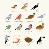 Bird icon collection. Different birds species like: owl, toucan, hummingbird, bullfinch and more vector illustration birds
