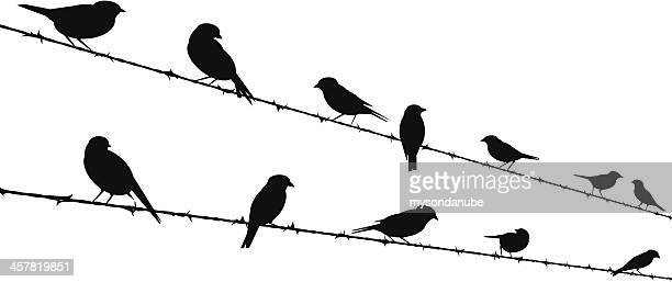 bird silhouettes on barb wire