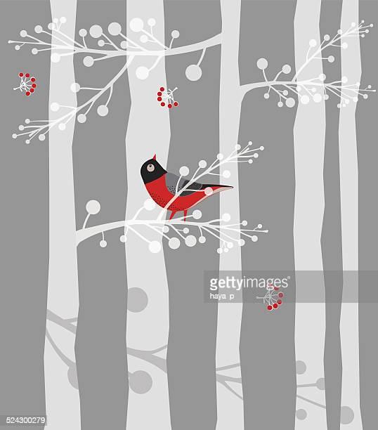 Bird,on Branch, Forest, Winter